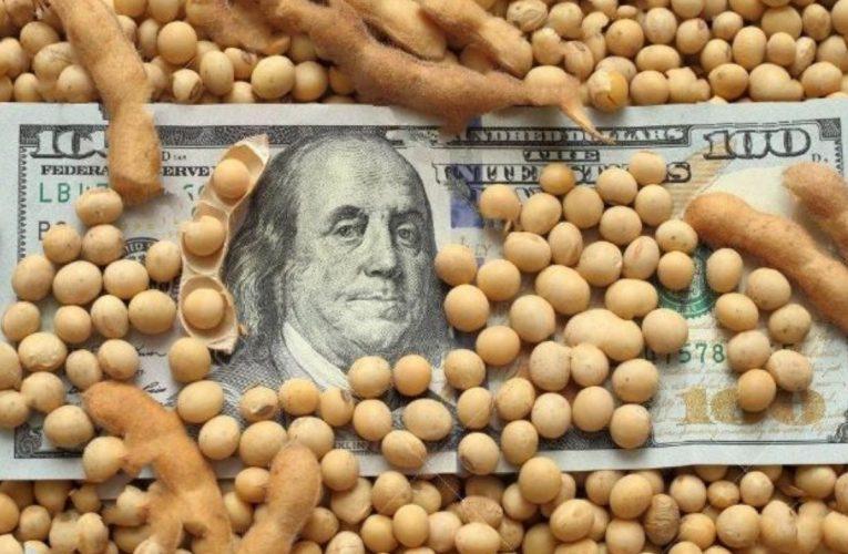 El valor de la soja sube en alza y seguirá creciendo
