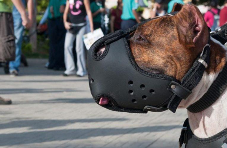 Perros peligrosos: ahora hay que registrarlos en CABA